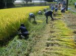 第9回 もち米の稲刈り会