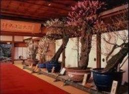 第66回 長浜盆梅展