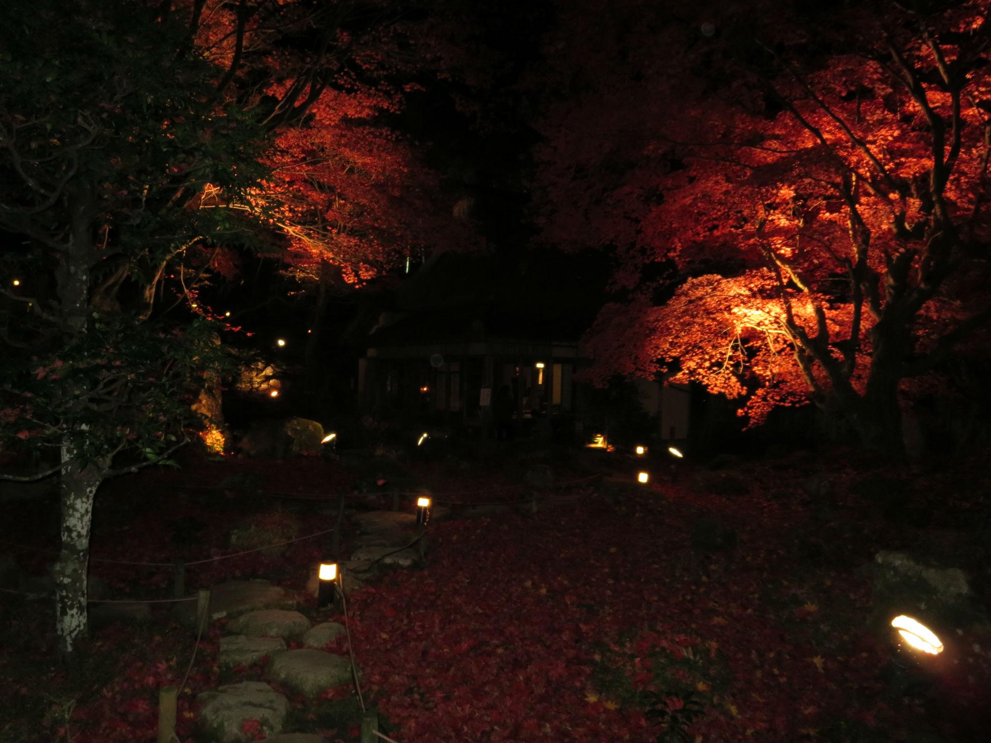 紅葉の隠れた名所・教林坊で癒しのひととき