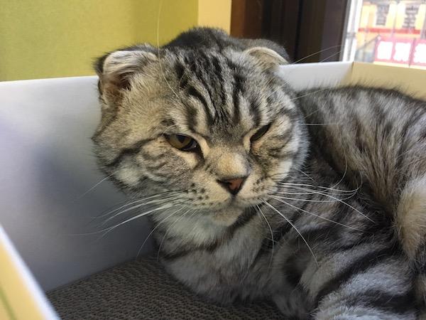 膳所の保護猫カフェ「ねこのおうち」で猫と戯れてきた