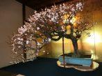 日本一!世界一!と名高い長浜盆梅展