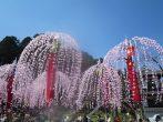 伝統的なほいのぼりの元でひと足早いお花見を~南山王祭