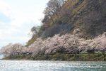 絶景!湖上で悠々 お花見クルージング