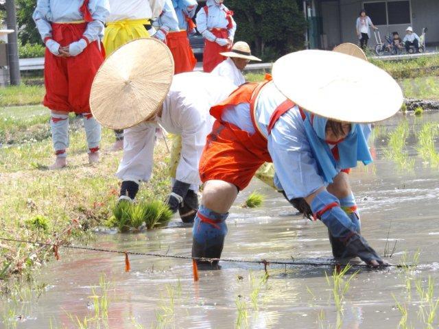 昭和の伝統を継承する野洲・悠紀斎田お田植まつり