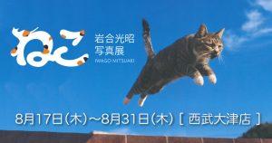 【8/17〜31】「ねこ」岩合光昭写真展【西武大津店6F】