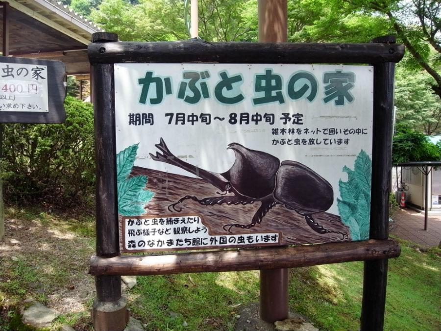 比叡山ドライブウェイ「かぶと虫の家」に行ってきた!