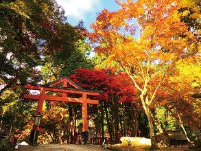 【11/1~30】日吉大社 もみじ祭