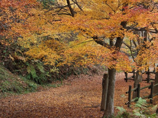グリーンパーク想い出の森