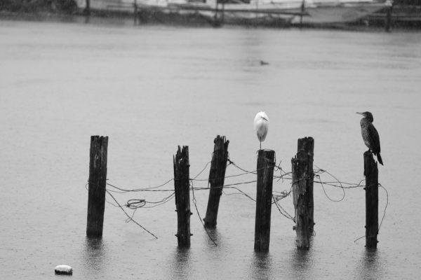乙女ヶ池の野鳥