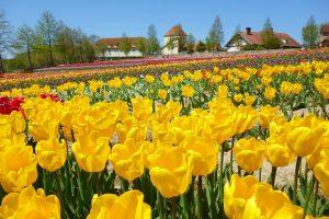 【3月】 続々リニューアル!滋賀農業公園「ブルーメの丘」