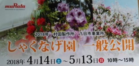 【4/14~5/13】滋賀県の県花! しゃくなげ園の一般公開に行ってきた!【東近江】