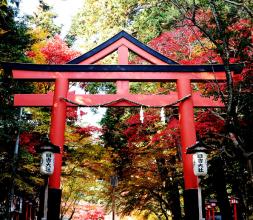 【11/1~30】秋の醍醐味!もみじ祭りin日吉大社