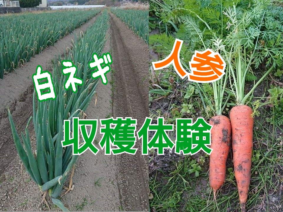 【12/2 日】「白ネギ・人参収穫体験」㏌しがらき。信楽産の新鮮野菜販売やランチもあるよ!