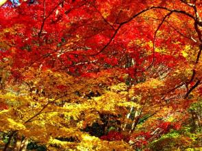 【2018秋】滋賀の紅葉まとめ~穴場スポットも大集結~