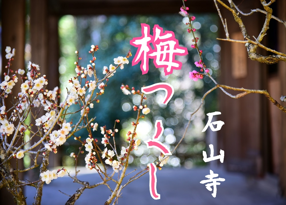 【開催中】山一帯に咲く梅花と盆梅展。石山寺「梅つくし」3/18まで。
