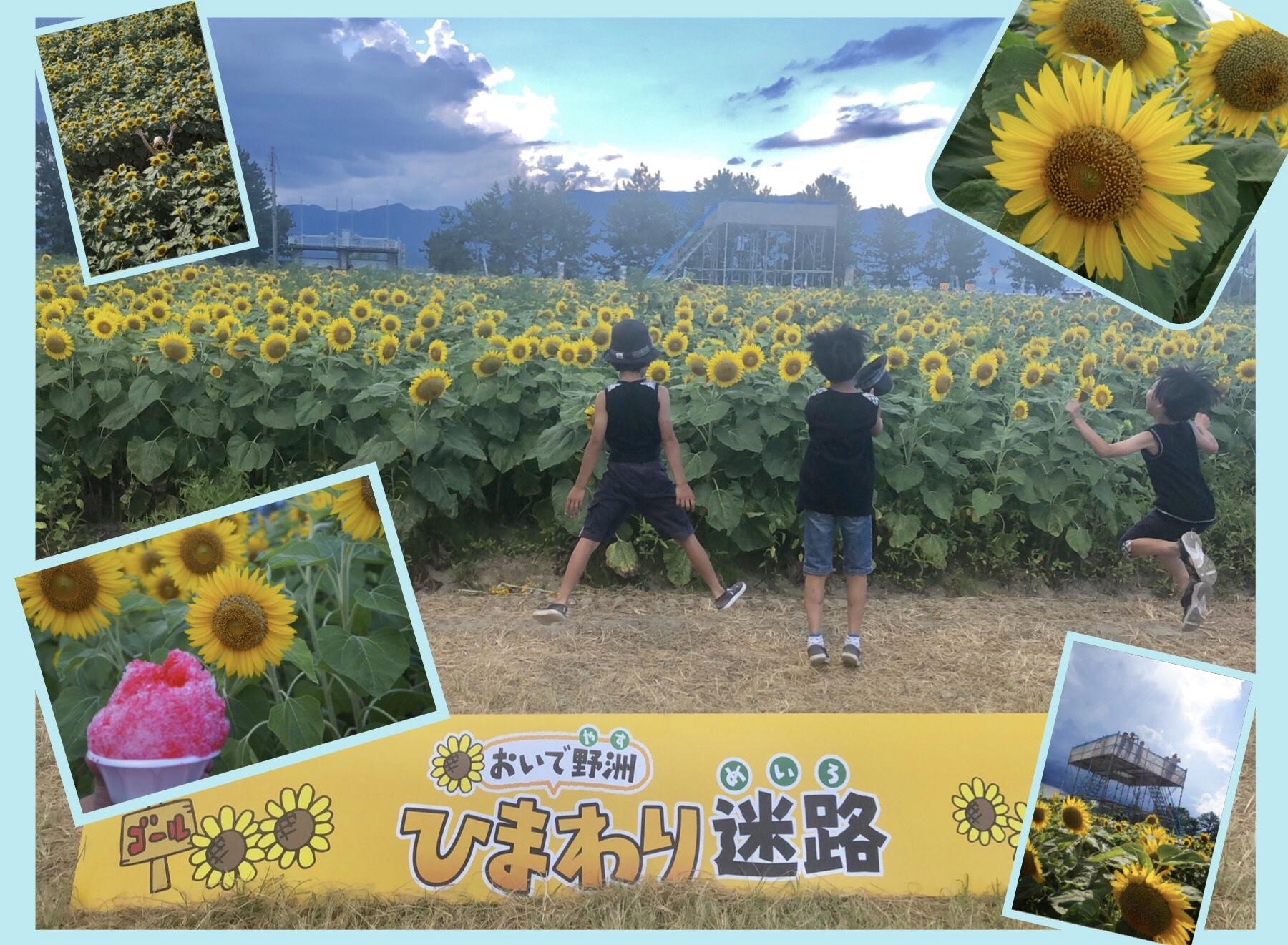 【〜8月12日(月・祝)】咲き誇る5万本の向日葵!おいで野洲ひまわり迷路に行ってきた!