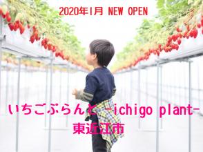 【1/7オープン】[いちご ぷらんと -ichigo plant-]で種類豊富ないちご狩りが楽しめる!(東近江市)