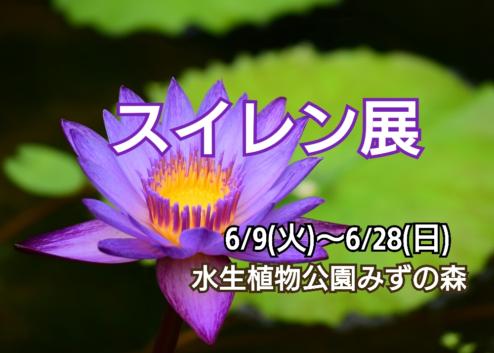 【6/9~28】水生植物公園みずの森「スイレン展」 午前中の観賞をおすすめ(草津市)