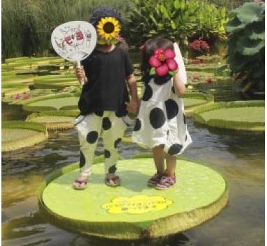 パラグアイオニバスに乗りに行こう! in 水生植物公園みずの森(草津)