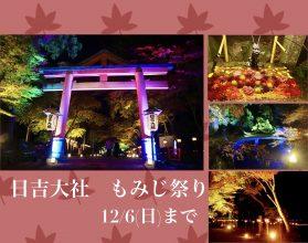 【~12/6】日吉大社もみじ祭りに行ってきた♪3千本の紅葉・幻想的なライトアップ・花手水…昼と夜で違う表…