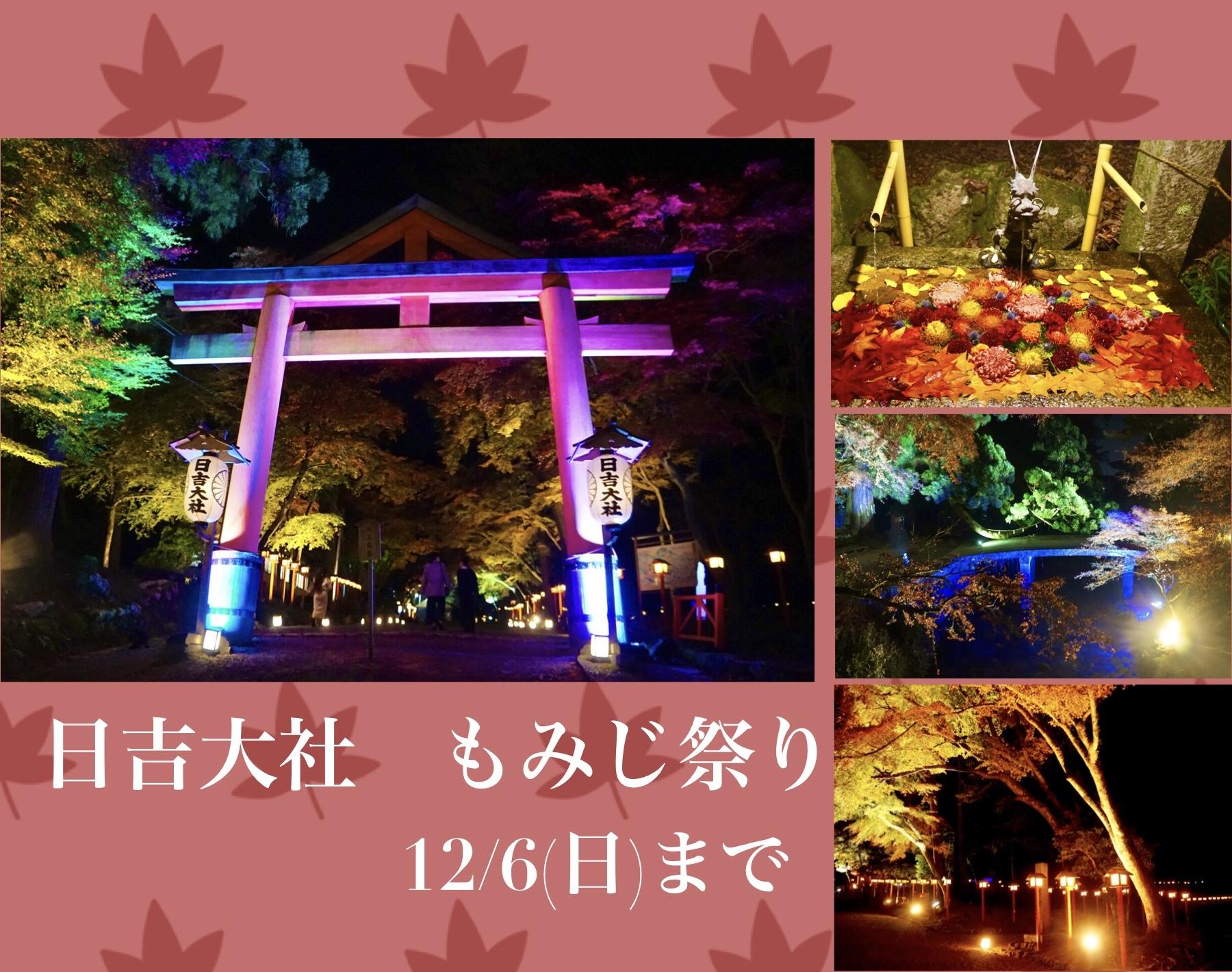 【~12/6】日吉大社もみじ祭りに行ってきた♪3千本の紅葉・幻想的なライトアップ・花手水…昼と夜で違う表情も楽しめます♪