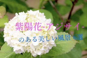 梅雨の癒やし!滋賀、アジサイのある美しい風景6選【2021年】