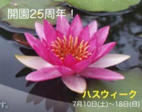 """【7/10(土)〜18日】開園25周年記念 """"ハスウィーク""""  水生植物公園みずの森(草津)"""
