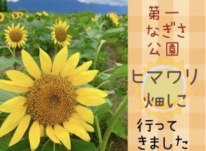 第1なぎさ公園ひまわり畑に行ってきました! 琵琶湖と比良山を背景に咲き誇る1万2千本のヒマワリ(守山)